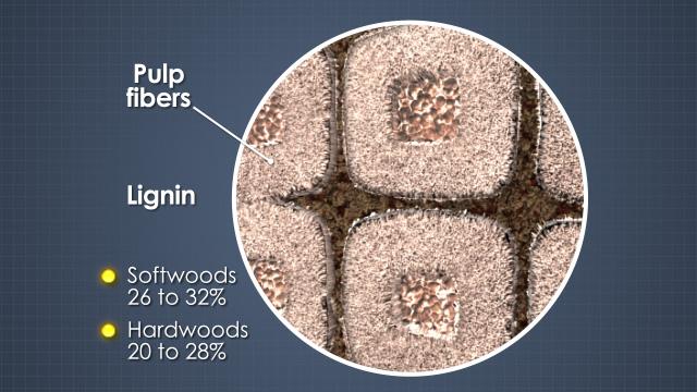 pulp bleaching basic principles