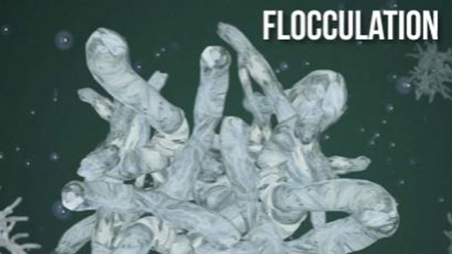 Flocculation is the process of bringing microflocs formed by coagulation together into even larger flocs