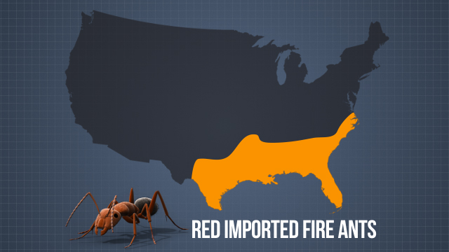 The primary areas in the U.S. where fire ants are a concern are the Southeast and Southwest.