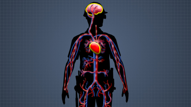 When a person is in shock, the body doesn't pump enough blood to vital organs, including the heart and brain. This can lead to serious damage and even death.