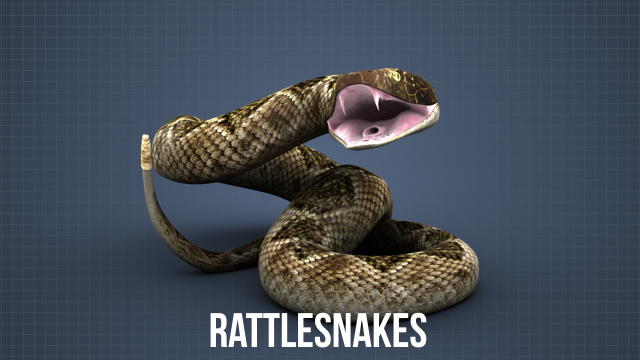 Rattlesnakes are one type of poisonous snake in the United States. Others include the water moccasin, copperhead, and coral snake.