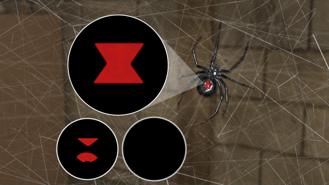 The black widow is typically black in color with a distinctive red hourglass marking.