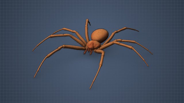 The brown recluse is typically brown with a violin-shaped marking on the top near its head.