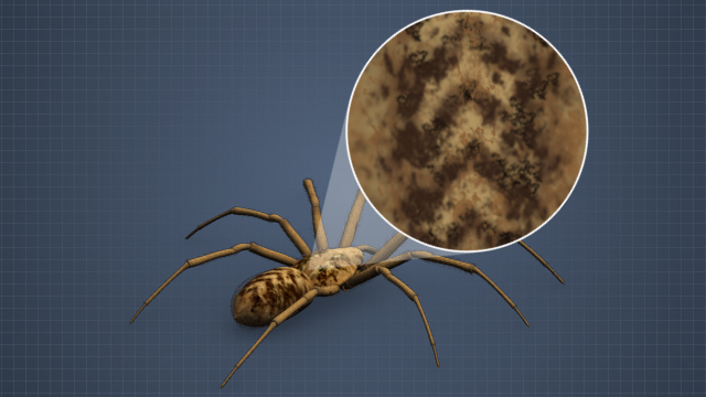 Hobo spiders are typically brown and have V-shaped markings on their body.