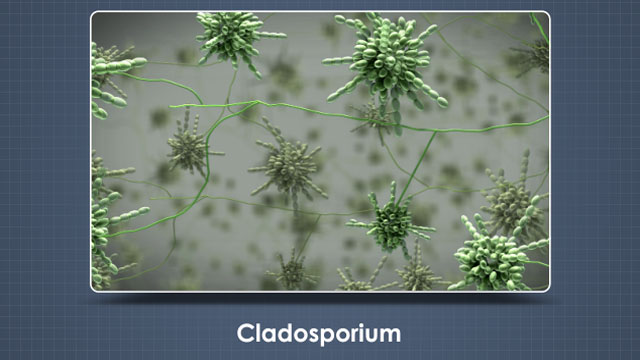 Cladosporium, which can be olive green, black, and brown and is often found in wallpaper and carpet.