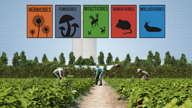 In agriculture, pesticides are used to control pests that damage crops.