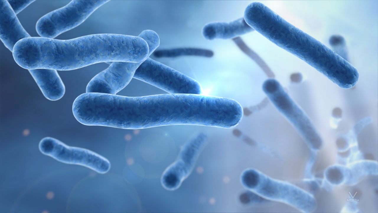 One type of harmful bacteria sometimes found in water cooling systems is legionella.