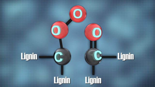 Ozone degrades lignin by attacking carbon-carbon double bonds.